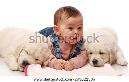 Two One month old puppie of golden retriever with little four   month girl - stock photo