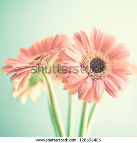 Two Pale Pink Flowers - stock photo