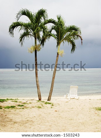 Two Palm Tree Near the Ocean