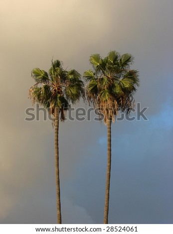 Two Palm Trees and clouds