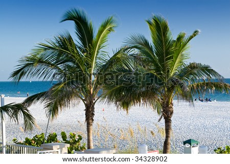 Two Palm Trees on Lido Beach, Sarasota, Florida