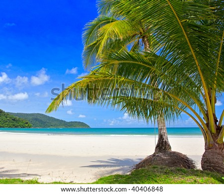 Two palm trees on the white sand beach  near turquoise sea water with blue sky background