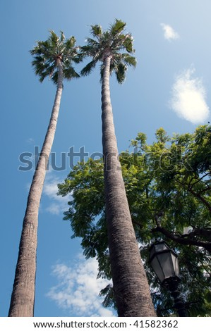 two palm trees towers above a street lamp on state street in santa barbara - stock photo