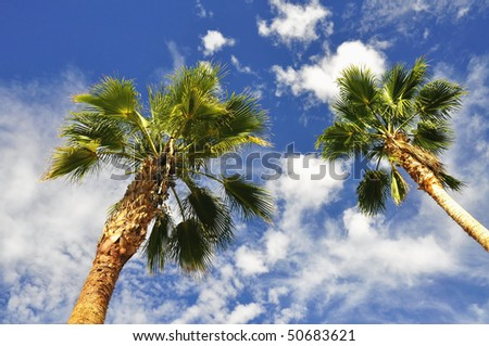 two palms against pretty blue sky useful as a background - stock photo
