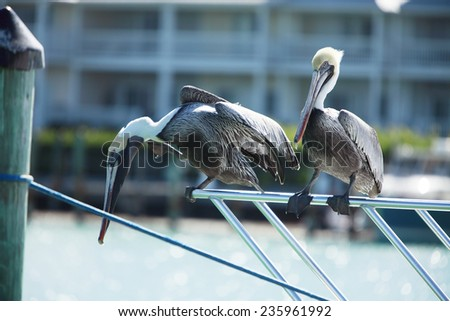 Two pelicans on the railing of the ship, Florida - stock photo