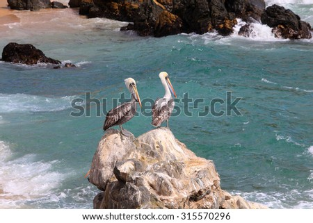 Two pelicans on the rock, Chile - stock photo
