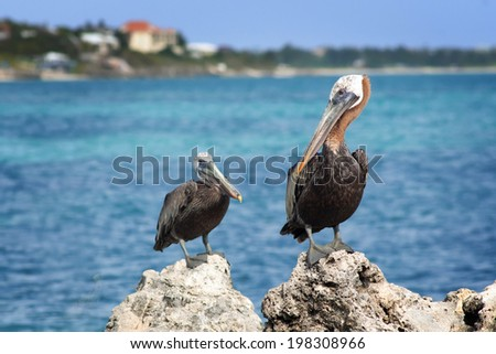 Two pelicans sit atop rocks in Providenciales, Turks and Caicos Islands - stock photo