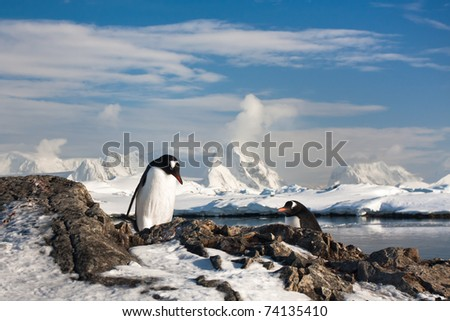 Two penguins dreaming, mountains in the background