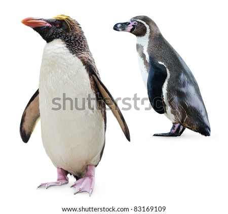 Two penguins isolated on white (Northern Rockhopper and Humboldt penguins) - stock photo