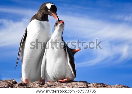 two penguins resting on the stony coast of Antarctica - stock photo