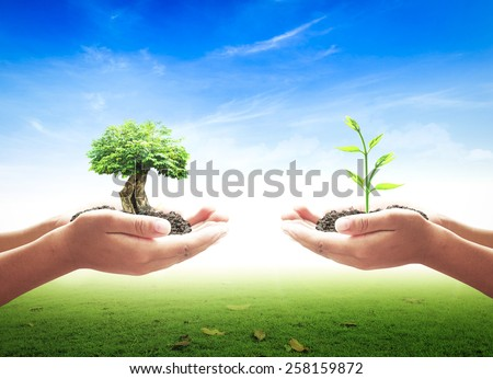 Two people hand holding young plant and big tree over blur soil background. Ecology World Environment Day Investment Donation Trust ROI Insurance Ecological City Organ Donation CSR Park Hope concept - stock photo