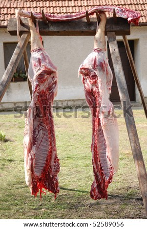 Two pig halves hanging in a backyard - stock photo
