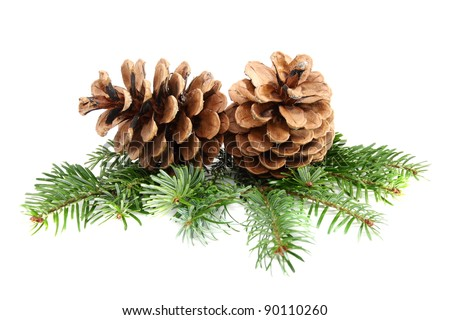 Two pine cones with branch on a white background. - stock photo