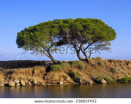 two pines on the coast of Sardinia, Italy