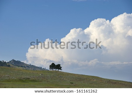 Two pines stand on an open hillside before a dramatic cloudbank - stock photo