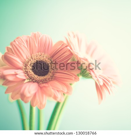 Two Pink Flowers - stock photo