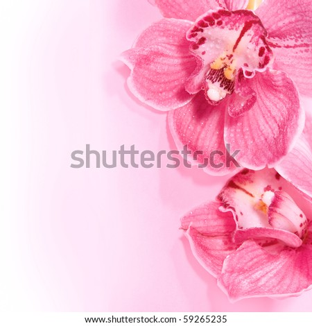 Two pink orchids. - stock photo