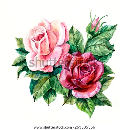 Two pink roses. Pattern from rose. Wedding drawings. Greeting cards. Rose background, watercolor composition. Flower backdrop.   - stock photo
