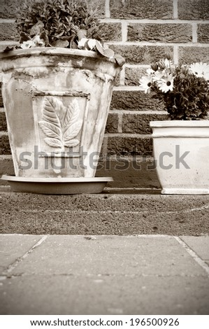 Two plants in worn clay pots against a brick wall. - stock photo