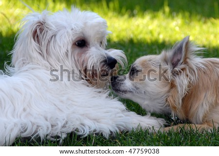 Two playful dogs - stock photo