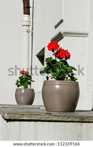 Two pots of flowers at entrance to house - stock photo