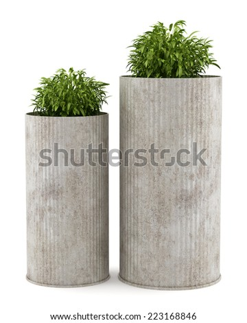 two potted houseplants isolated on white background - stock photo