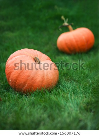 two pumpkins on grass colour photo  - stock photo