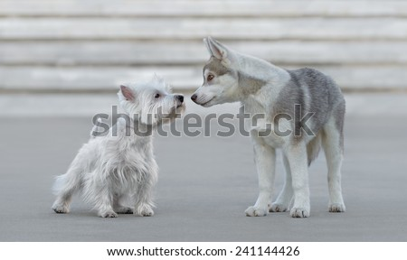 Two puppies playing with each other outdoors - stock photo