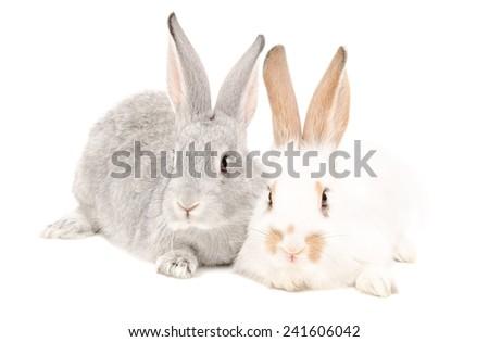 Two rabbits sitting isolated on white background - stock photo