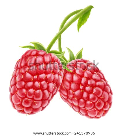 Two raspberries with long stems isolated on white, with clipping path - stock photo