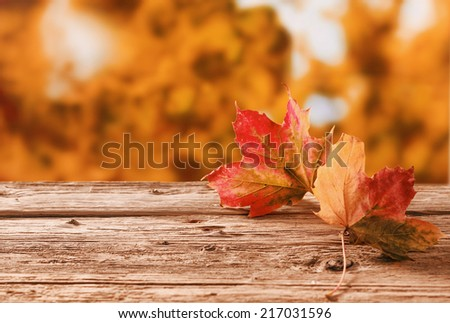 Two red and orange autumn leaves on a rustic table outdoors showing the changing colors with the changing seasons against a backdrop of a fall garden with golden orange foliage, with copyspace - stock photo