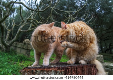 TWO RED CATS IN THE GARDEN - stock photo