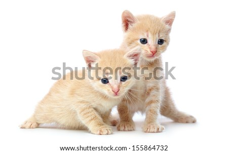 Two red-haired kittens. Isolated on white background