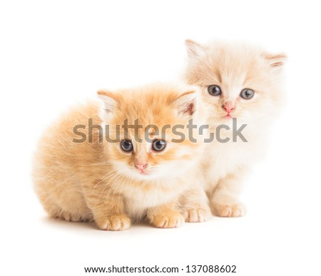 Two red kittens isolated on white background - stock photo