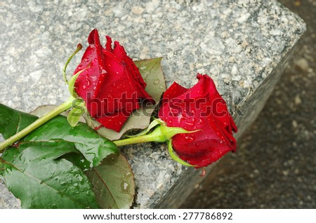 Two red roses on the gravestone - stock photo