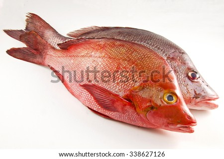 Two Red Snappers, white background. - stock photo