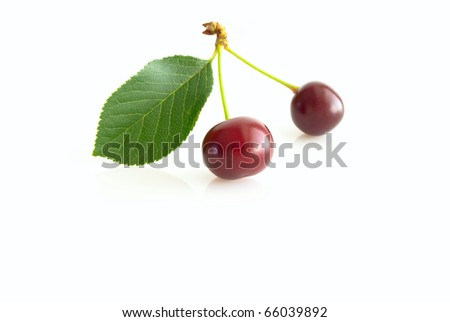Two ripe cherries, with slip, close-up, on white background, copy space.
