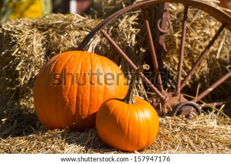 two ripe pumpkins on a horse cart with golden hay