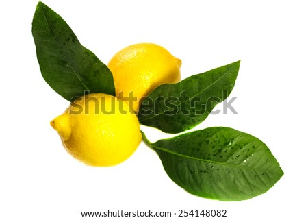 Two ripe yellow lemon with leaves - stock photo
