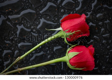 Two roses in raindrops romantic love concept - stock photo