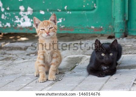 Two sad homeless street kittens - stock photo