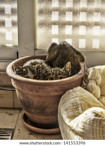 Two scared kittens hidden inside a plant pot - stock photo