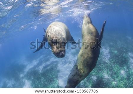 Two sea lions - stock photo