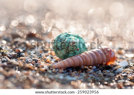 Two sea shell on the beach - stock photo