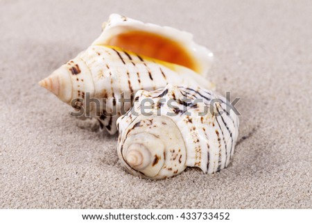 two sea shells lying on the sand, close up. - stock photo