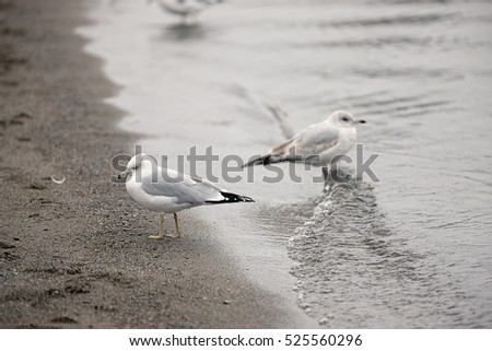 Two seagulls on the shore in Coeur d'Alene, Idaho.