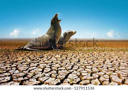 Two seals suffering from the lack of water in a hot and dry environment - stock photo
