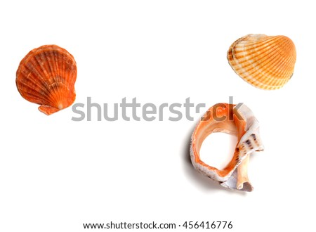 Two seashells and broken rapana isolated on white background. View from above. - stock photo