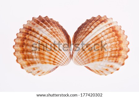 two seashells isolated on white background - stock photo