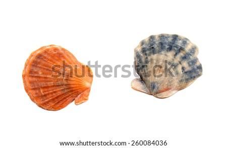Two seashells. Isolated on white background - stock photo